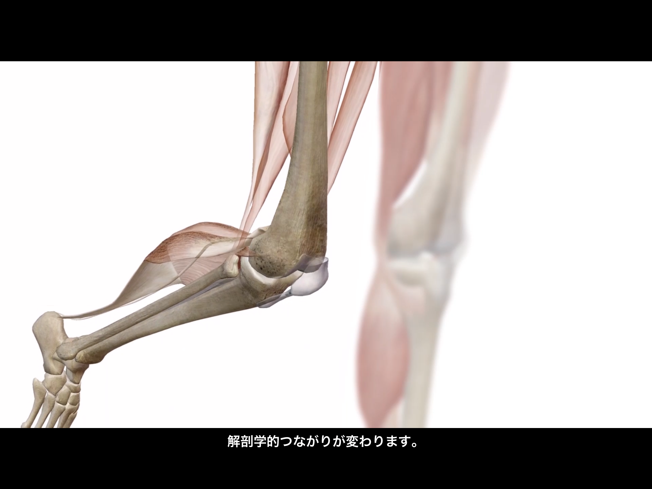 Thumbnail of Visible Body Muscle Premium 3D model expert videos