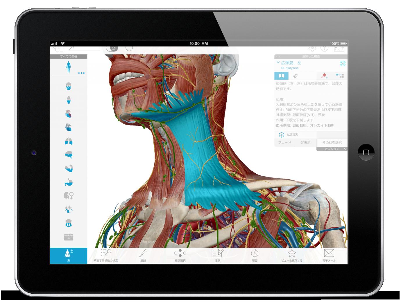Thumbnail of Visible Body Human Anatomy Atlas 3D model