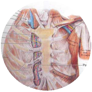 Image Bank for Clinically Oriented Anatomy, 8th Edition