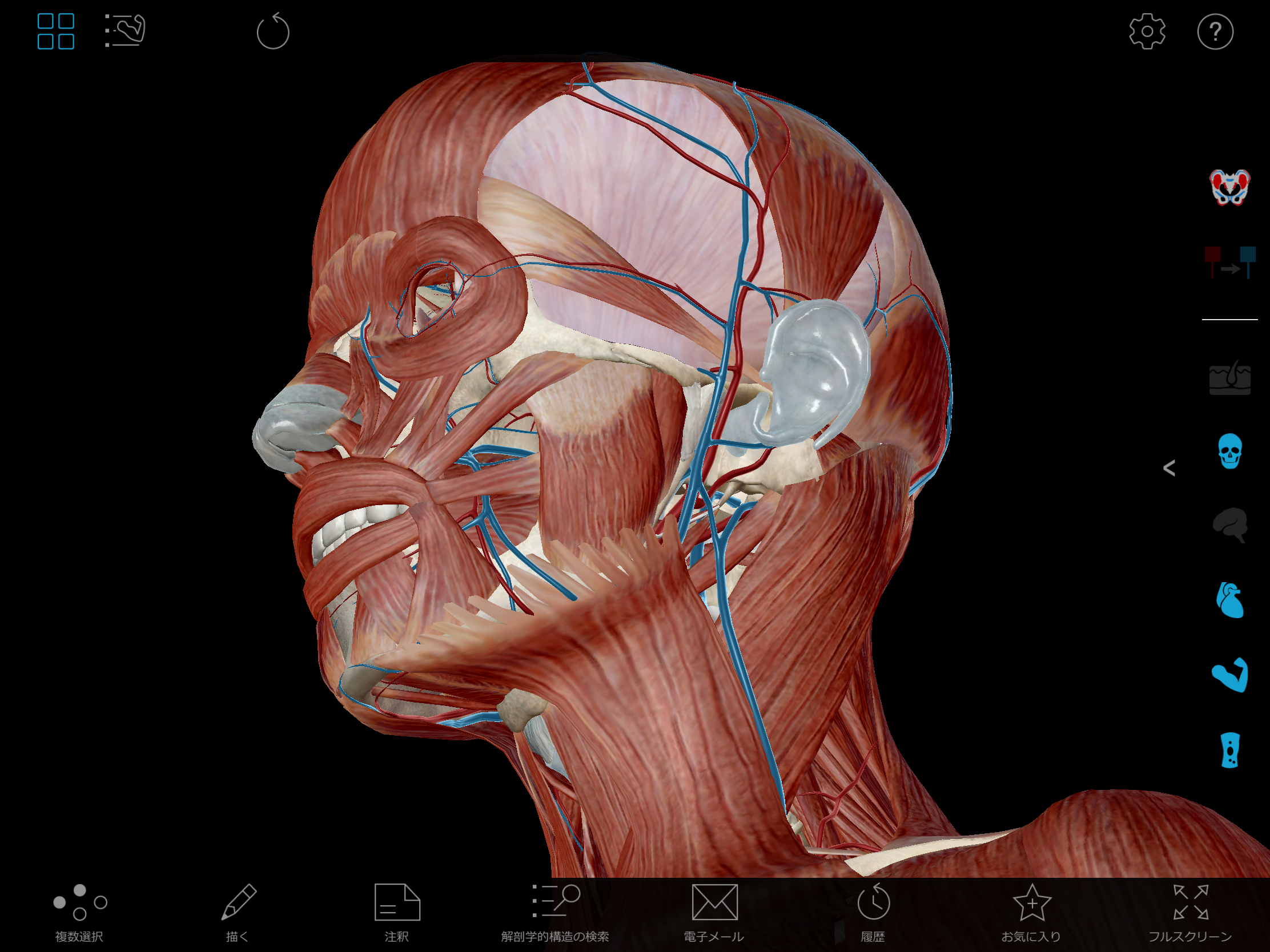 Thumbnail of Visible Body Muscle Premium 3D model
