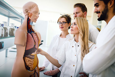 Medical faculty gathered around a model of a human body