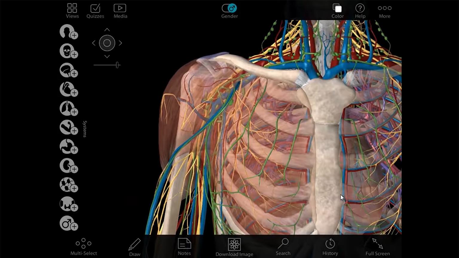 Screenshot of Visible Body Human Anatomy Atlas Walkthrough video