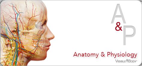 Visible Body Anatomy & Physiology badge