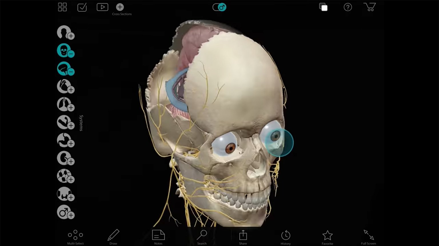 Screenshot of Visible Body Apps: Anatomical Precision in Real 3D video