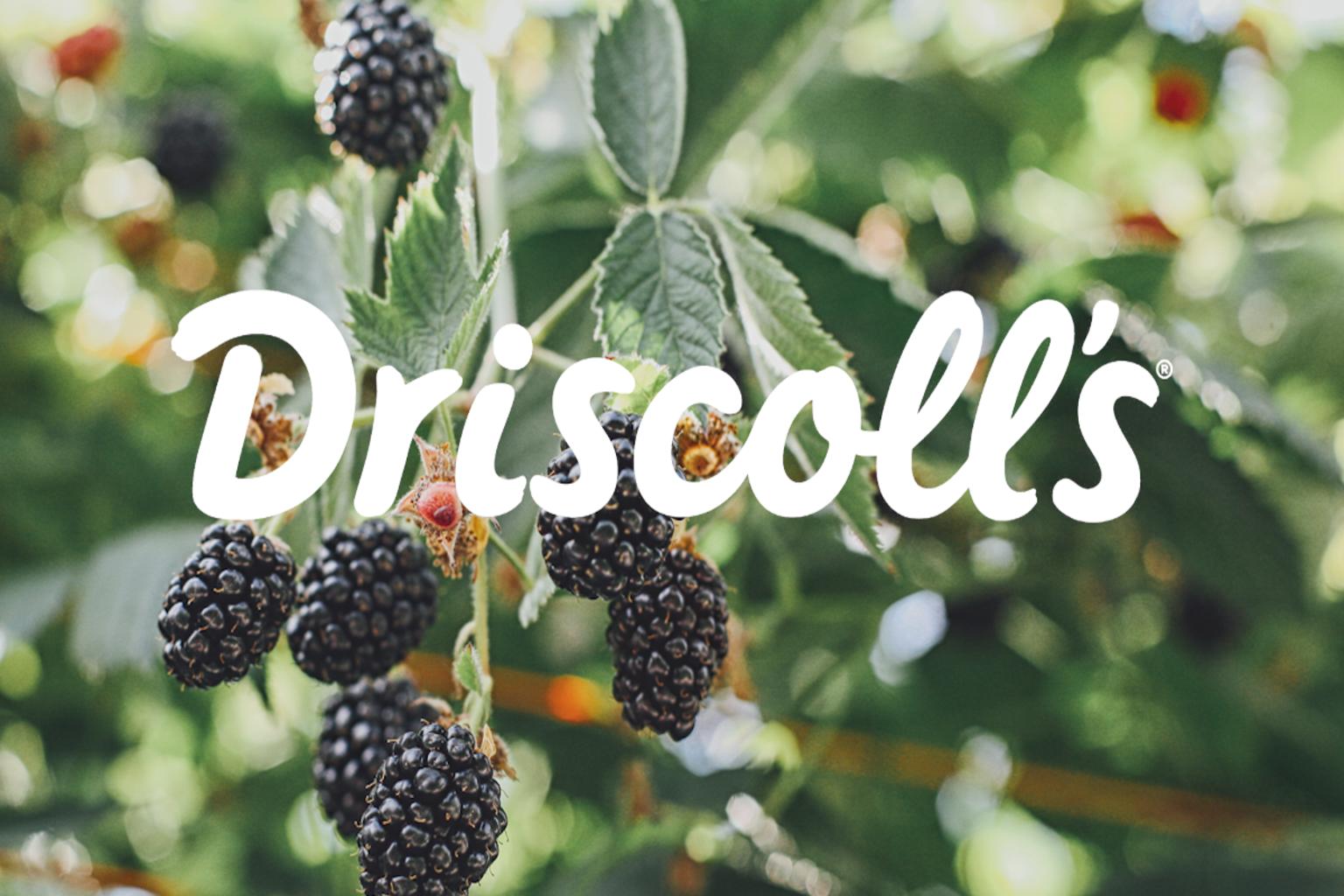 driscolls-fast-close-aihub-cch-tagetik-thumbnail