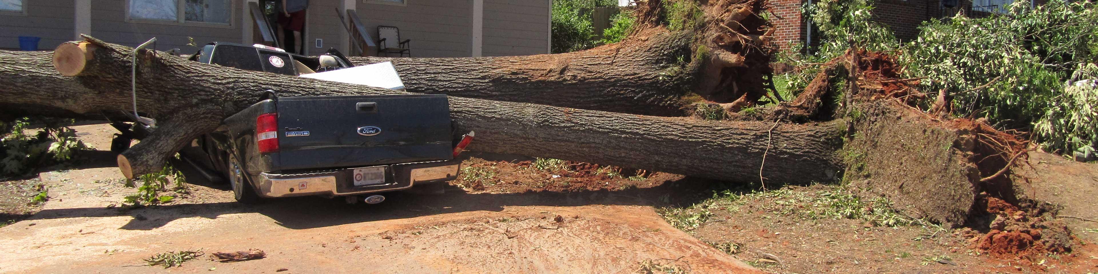 Tree fallen on pickup truck