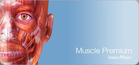 Visible Body Muscle Premium badge