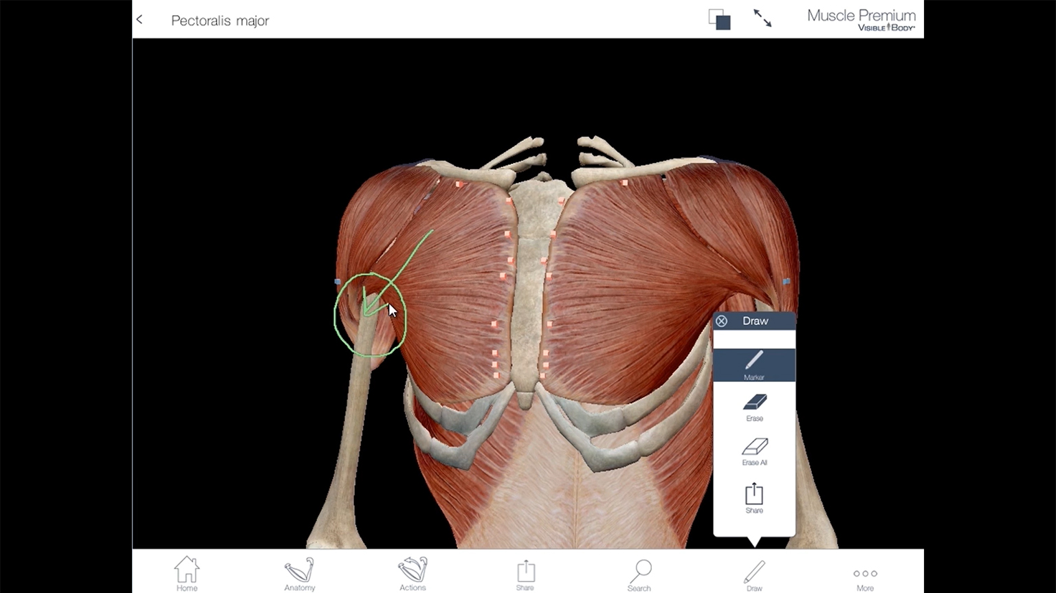 Screenshot of Visible Body Muscle Premium Tutorial video