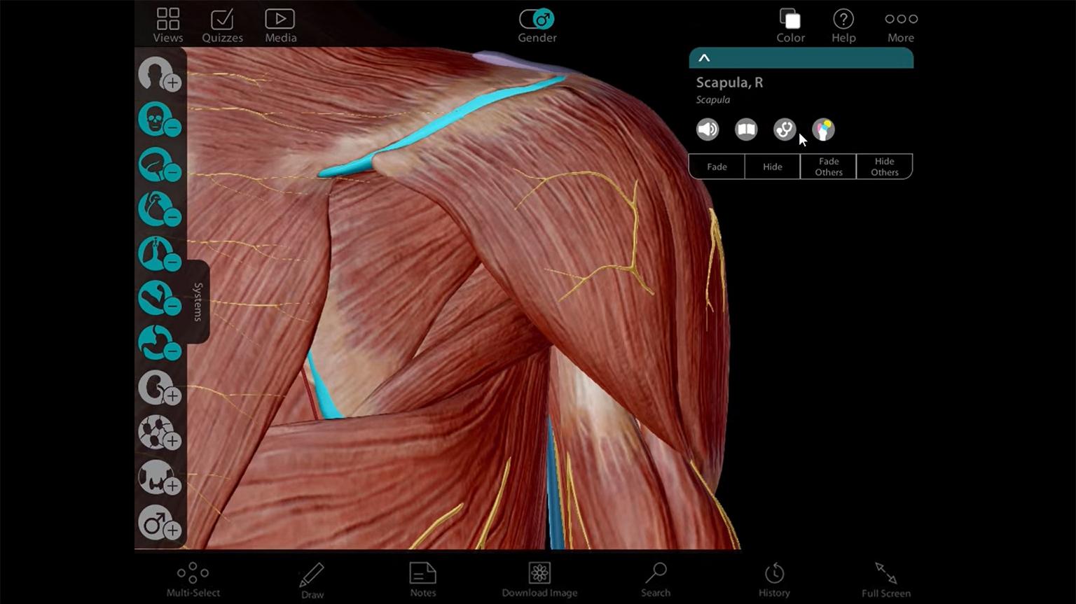 Screenshot of Human Anatomy Atlas 7 - PC/MAC Tutorial video